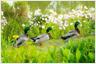 鳥のさえずり、森のささやき…自然に包まれた癒しのホテル
